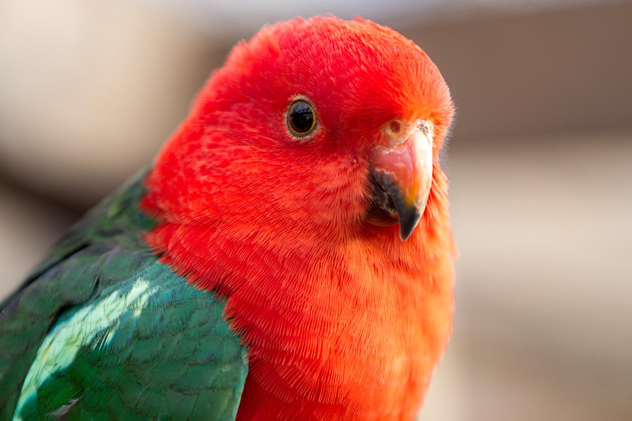 Trekantens Fugleforening